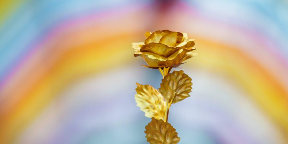 """Timp de 4 ani, Johannis si PNL, au sapat la radacina PSD-ului si in cele din urma au dat de """"Trandafirul de AUR"""" !!!"""