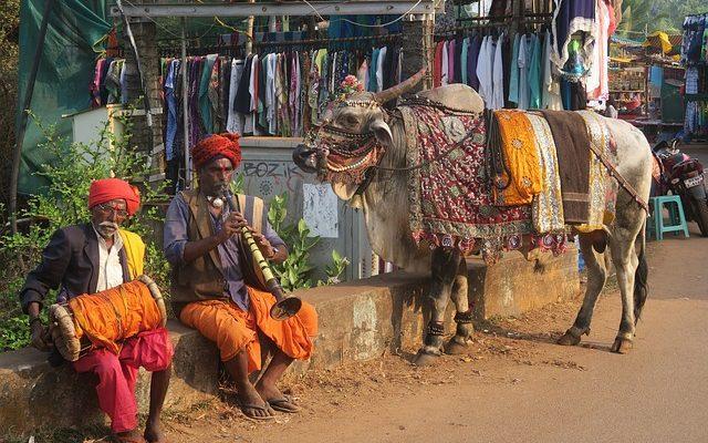 """Unii indieni folosesc balega și urina vacilor ca """"remediu"""" împotriva COVID-19. Medicii avertizează că prin această terapie se pot transmite mai multe boli"""
