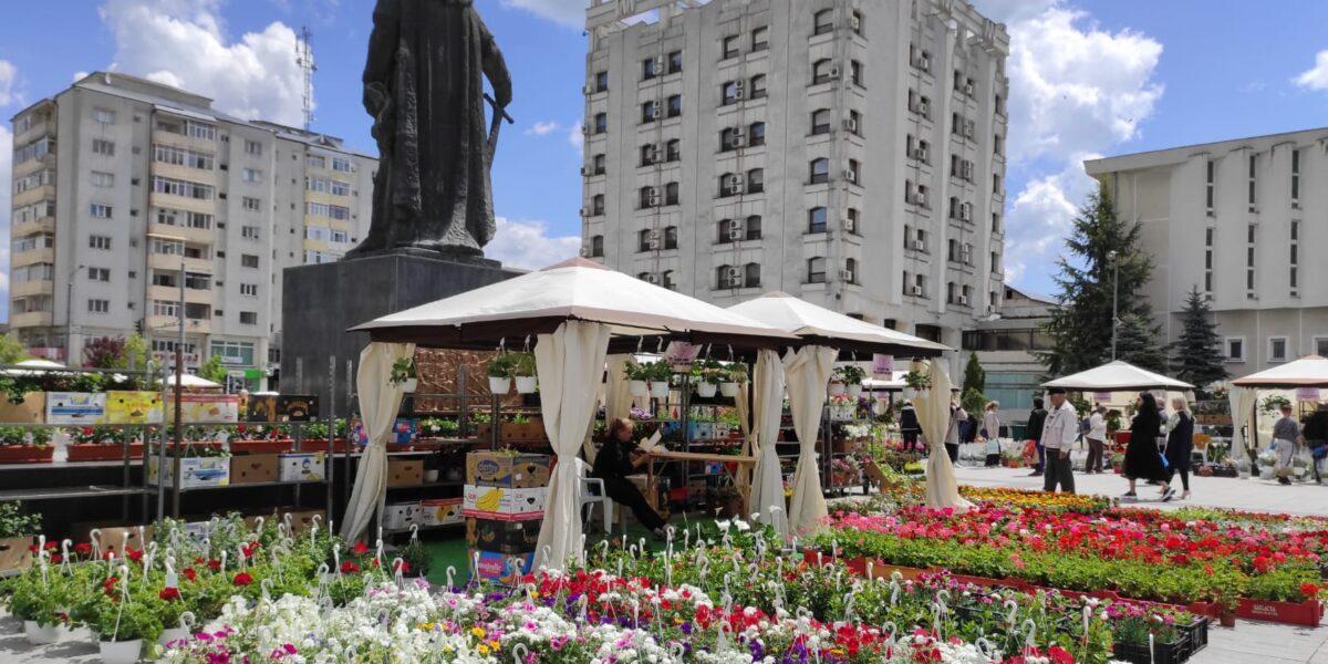 Expoziție de flori și arbuști în Piața Civică din Vaslui. Prețuri accesibile, pentru toate buzunarele