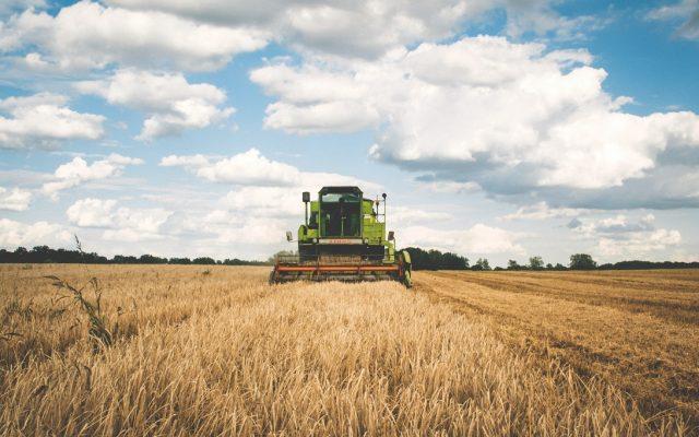 Raport SUA: în 2021, România revine în topul marilor producători mondiali de grâne. Exportul de grâu va crește cu 54%, cel de porumb cu 31%